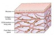 An image of the interstitium beneath the top layer of skin. Researchers say the organ is a body-wide network of interconnected, fluid-filled spaces supported by a lattice of strong, flexible proteins.