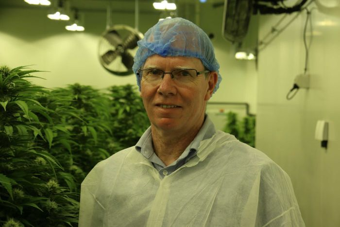 A man with glasses and a hairnet stands in front of a indoor marijuana crop.